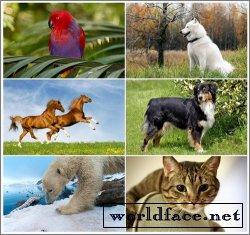 Коллекция обоев на тему Животные №6