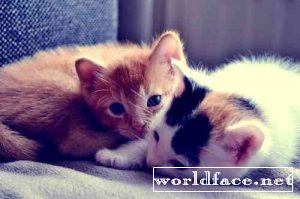Коте - милые, позитивные и не только)